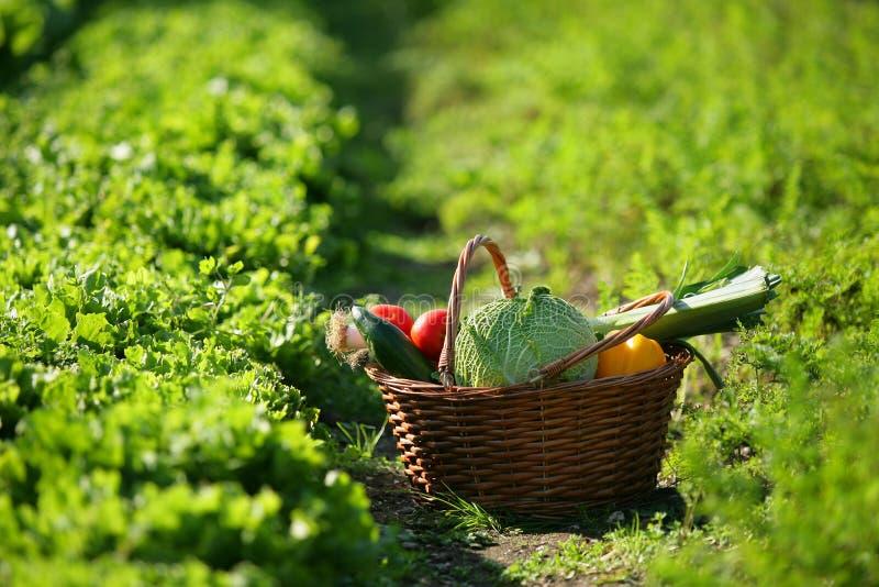 fulla grönsaker för korg arkivfoton