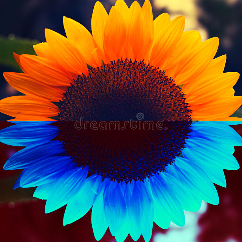 Fullday 2 royalty free stock image