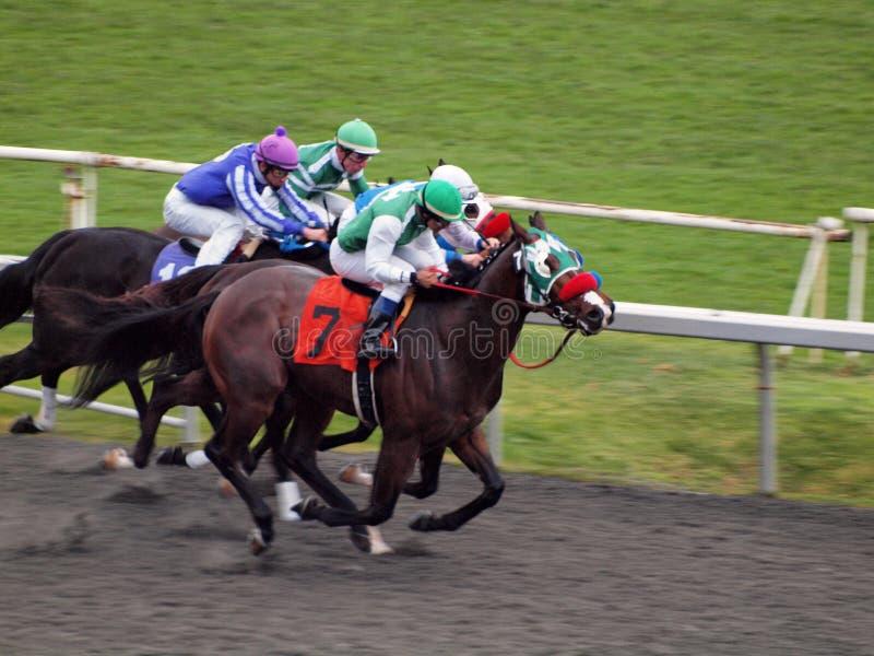 fullföljandehästlinje race som kör in mot royaltyfri fotografi