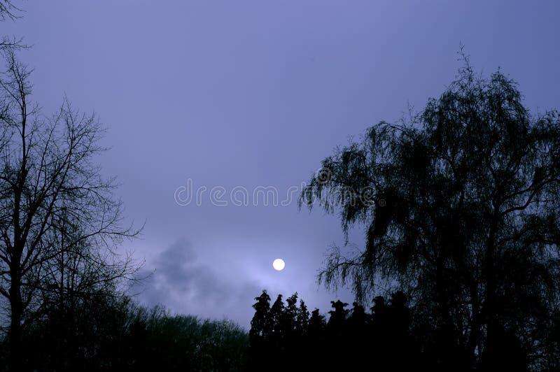 Download Fullmåne arkivfoto. Bild av dunkelt, trä, skog, mörker - 503672