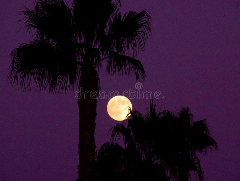 Fullmåne i en purpurfärgad himmel royaltyfri foto