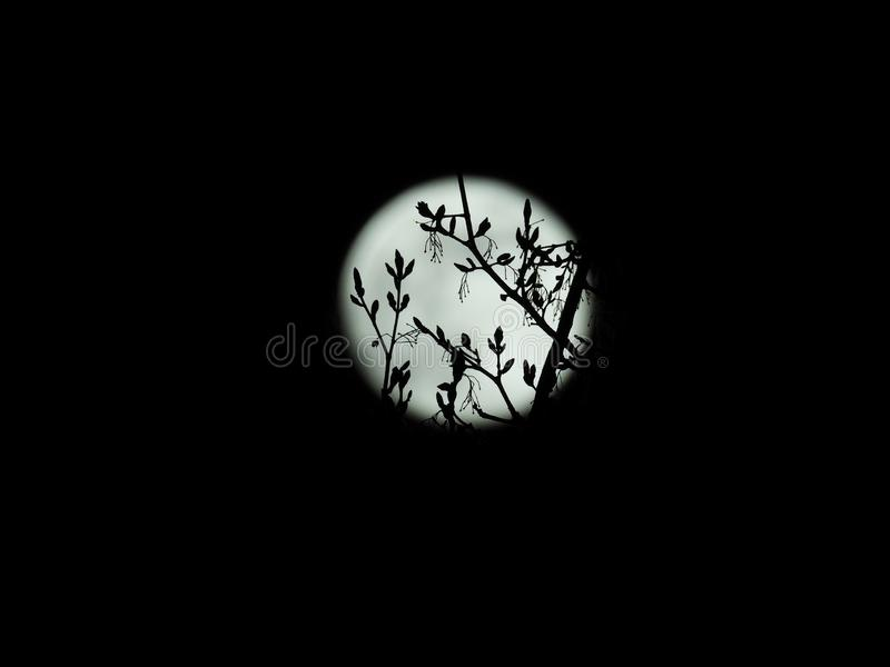 Fullmåne i himlen för stjärnklar natt vektor illustrationer