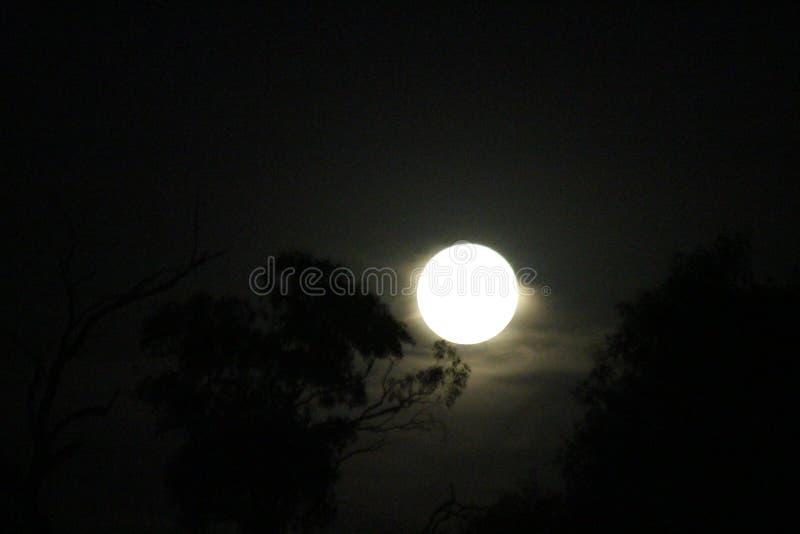 Fullmåne som stiger ovanför träd arkivbild