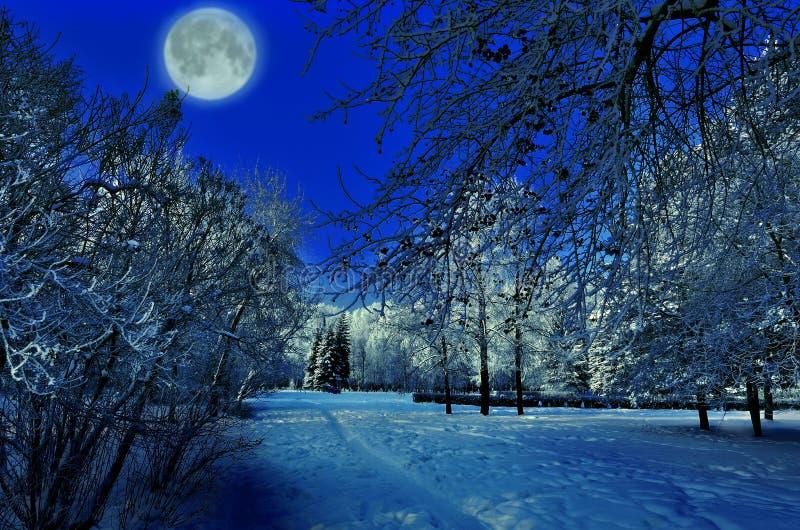 Fullmånen över vinter parkerar - härligt nattlandskap arkivbilder