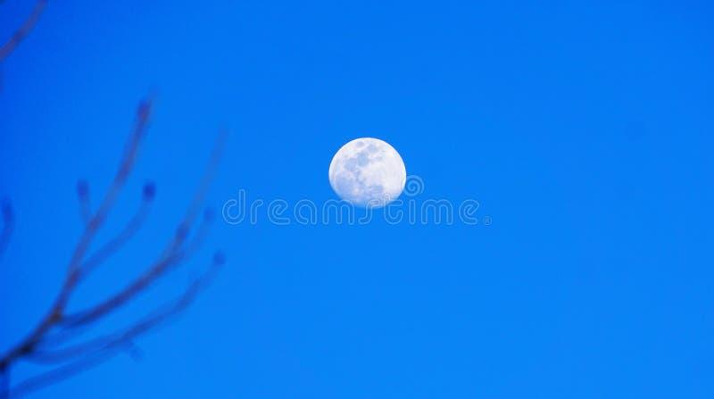 Fullmånen mot den blåa himlen arkivbild