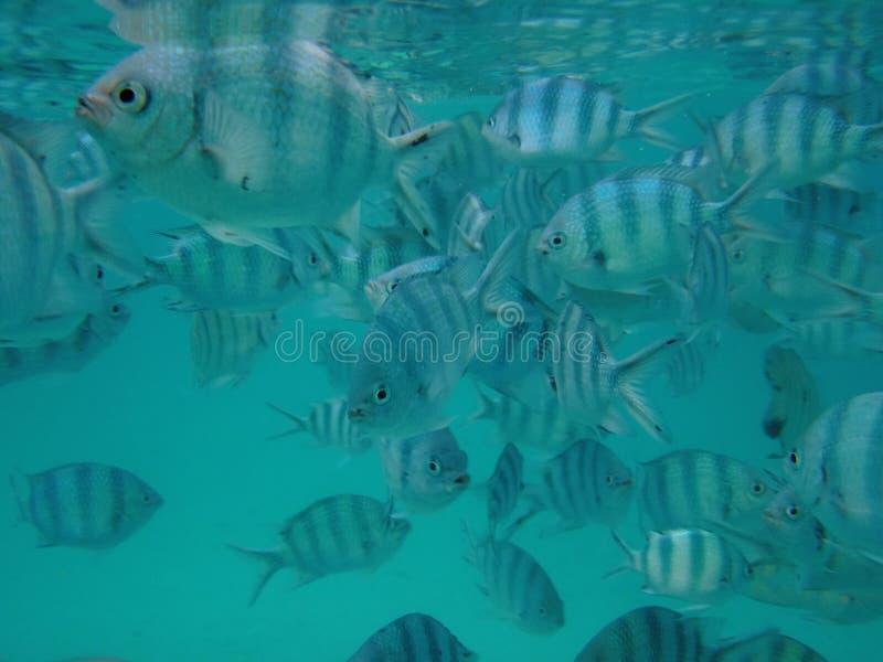 Download Fullsatt fiskflockhav fotografering för bildbyråer. Bild av fisk - 19789929