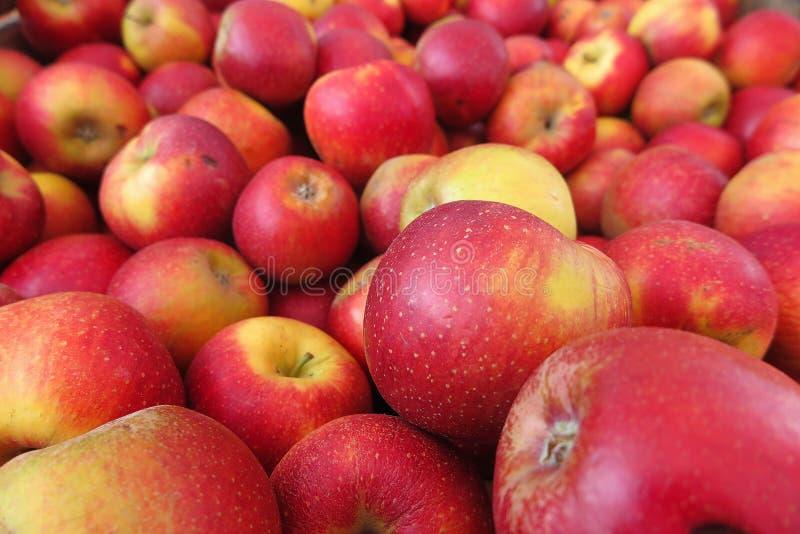 Fullt ramslut upp av wellant röda gula äpplen för hög arkivfoto