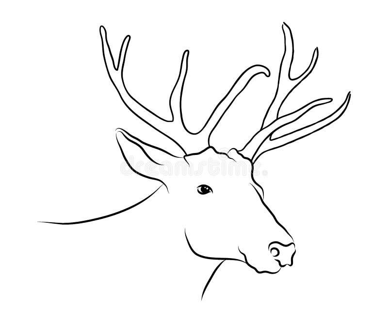 Fullvuxen hankronhjorthjorthuvudet skissar den monokromma svartvita teckningen för vektordiagram vektor illustrationer