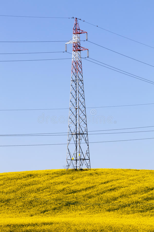 Fully flowered yellow meadow, electricity pylon & blue sky. Spring energy royalty free stock images