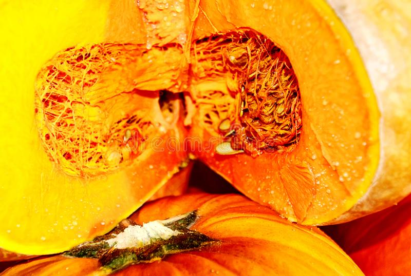 Fully ripe gorgeous Musquee de Provence, or Fairytale pumpkin. Thick, deep orange, moderately sweet flesh of fully ripe gorgeous Musquee de Provence, or stock images