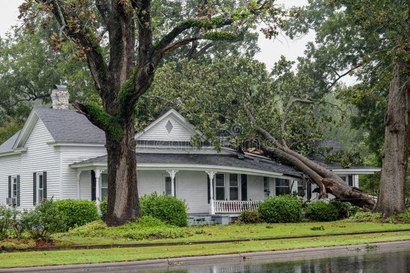 Fulminez les dommages dans Wilson, OR d'ouragan Florence photographie stock libre de droits