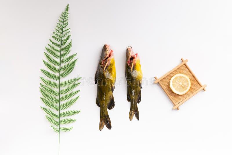 Fulvidraco fresco di ŒPelteobagrus del ¼ del fishï e del limone fotografie stock