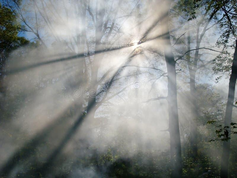 Fumée d'incendie de forêt photos libres de droits