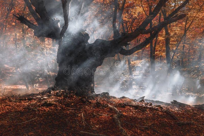 Fumée dans la forêt d'automne Image pour illustrer les incendies photographie stock libre de droits