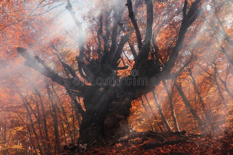 Fumée dans la forêt de hêtres Image pour illustrer les incendies image stock