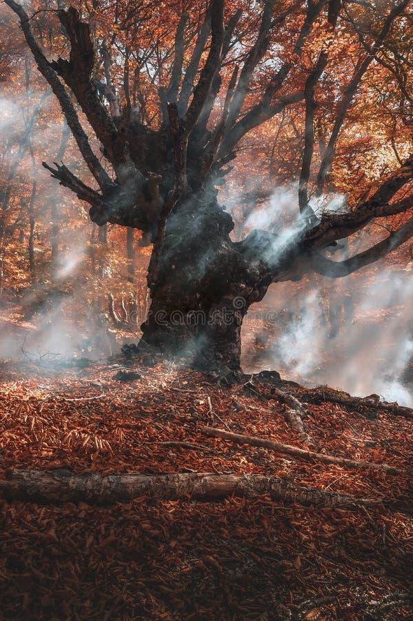 Fumée dans la forêt de hêtres Image verticale illustrant les incendies photo stock