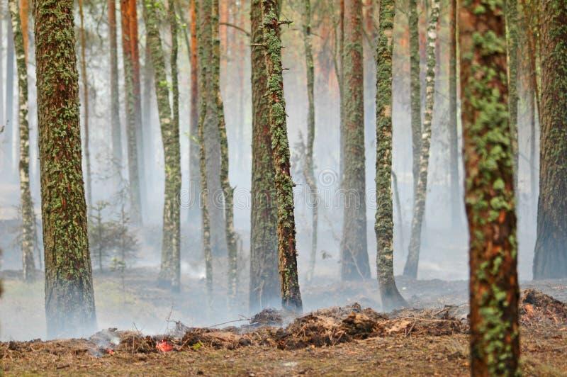Fumée et incendie dans le bois photos libres de droits