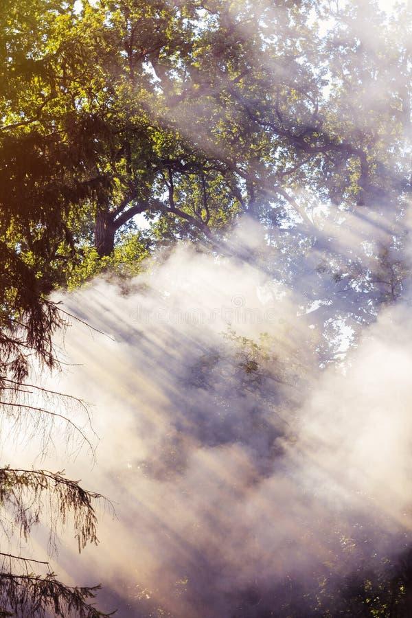 Fumée se soulevante d'incendie de forêt photos stock