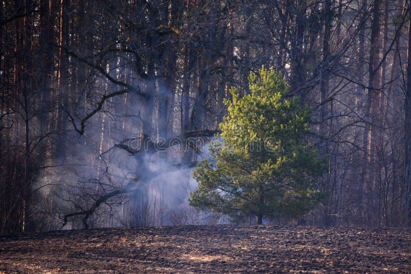 Fuma sopra il campo dal lato della foresta fotografia stock libera da diritti