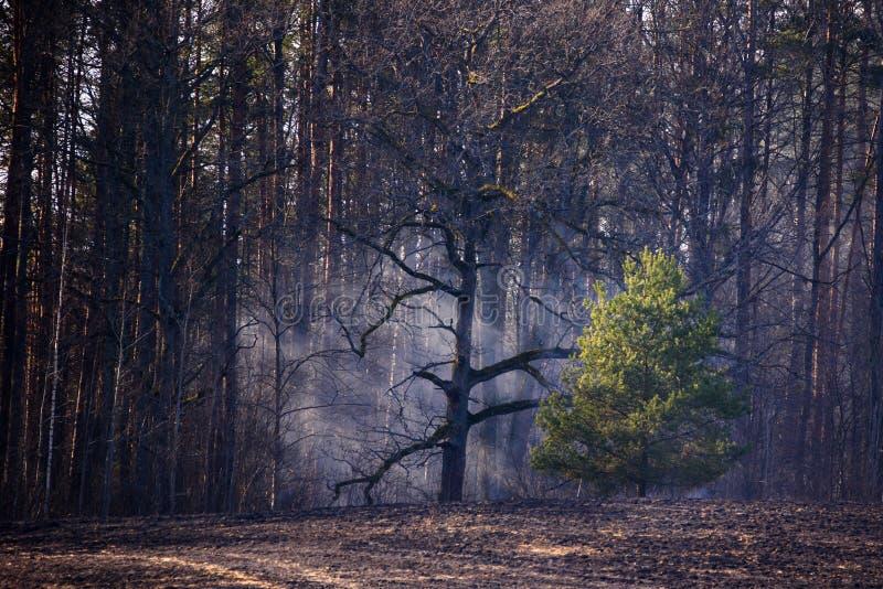 Fuma sopra il campo dal lato della foresta fotografia stock