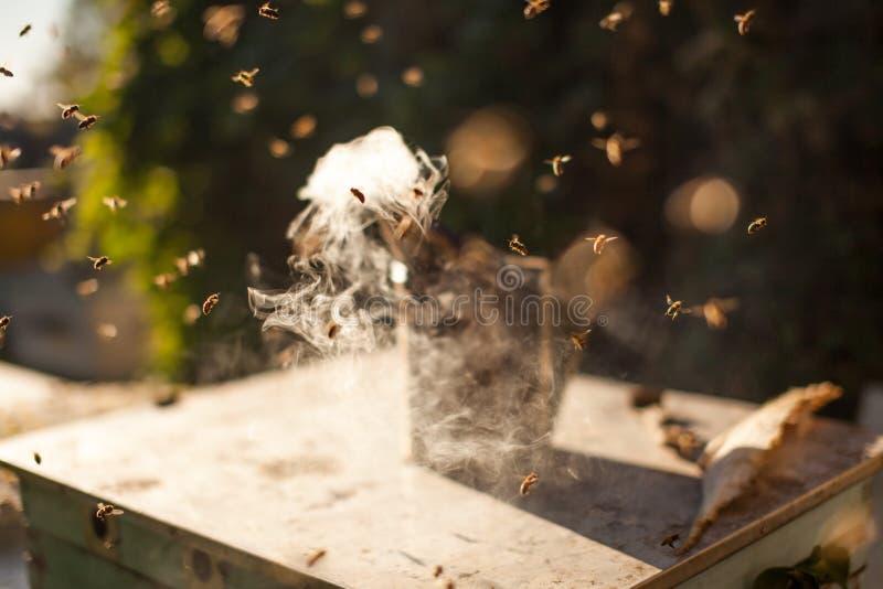 Fumador de la abeja que fuma en la apicultura estacional de las abejas de la miel del copyspace del colmenar que cultiva la produ foto de archivo libre de regalías