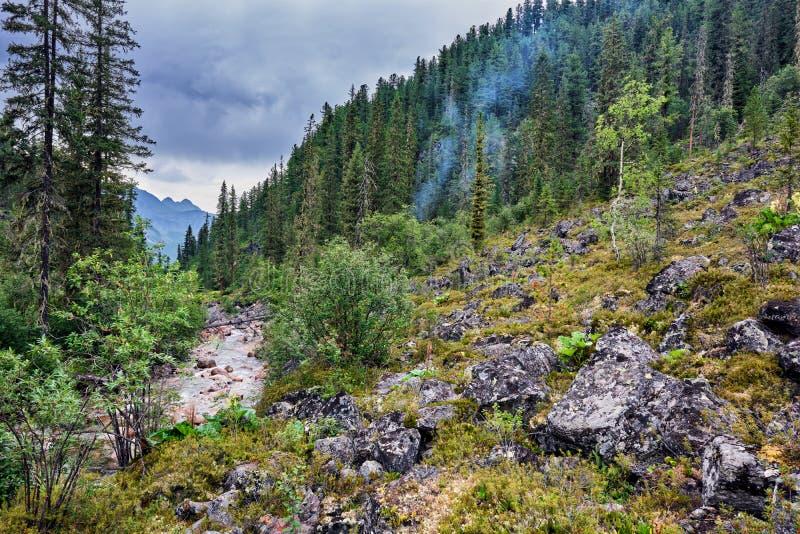Fume do fogo no taiga da montanha fotos de stock
