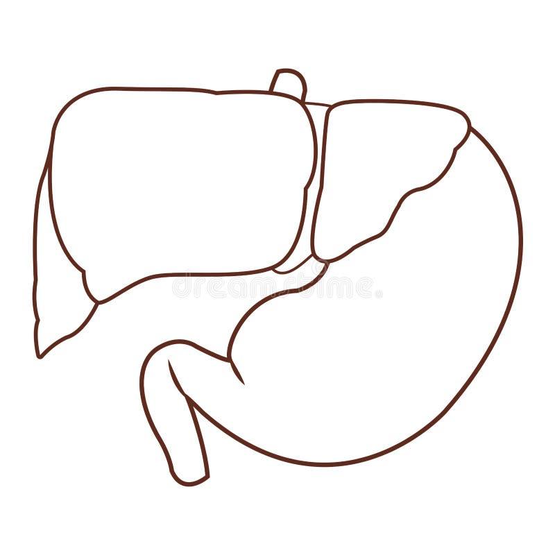 Fumetto dell'organo umano di anatomia illustrazione di stock