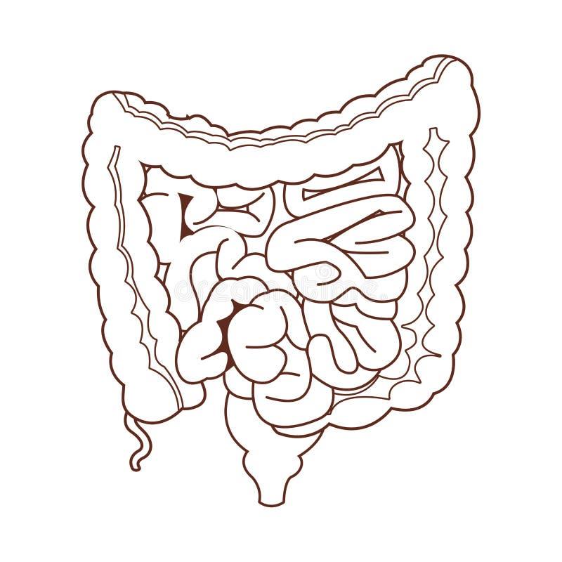 Fumetto dell'organo umano di anatomia royalty illustrazione gratis