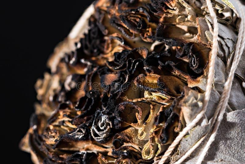 Fumigação ardendo sem chama do apiana cerimonial do salvia do sábio branco foto de stock