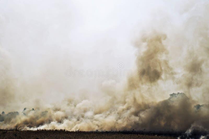 Fumo da un fuoco in un campo immagine stock