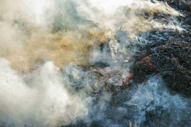 Fumo do fogo fotografia de stock