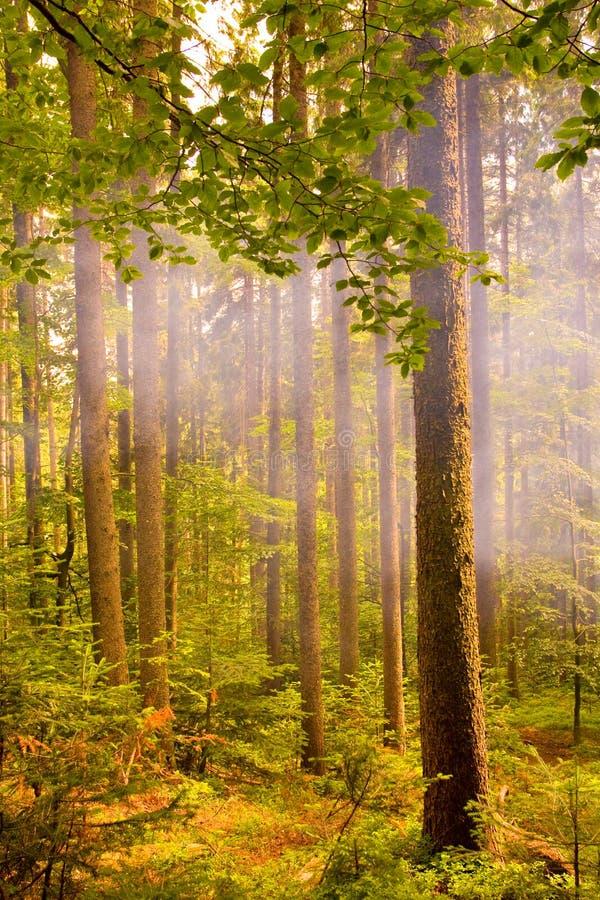Fumo na floresta imagem de stock royalty free