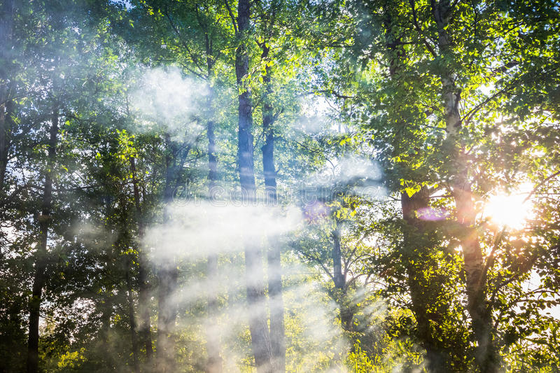 Download Fumo nella foresta immagine stock. Immagine di pericolo - 56886291