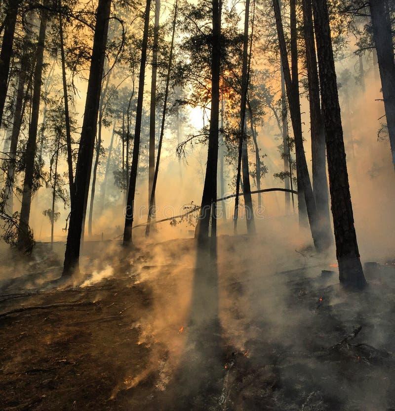 Fumo no assoalho da floresta imagens de stock royalty free
