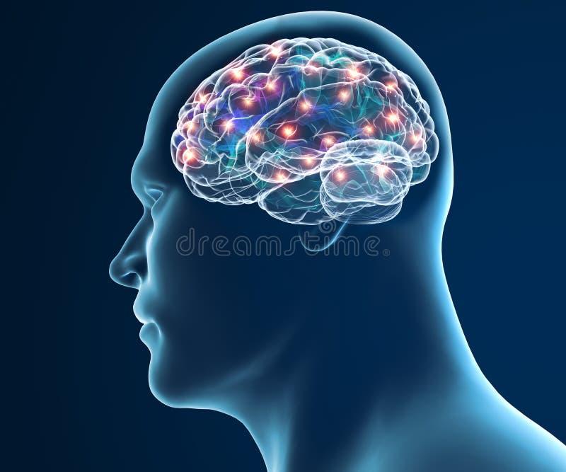 Funções da sinapse dos neurônios do cérebro ilustração royalty free