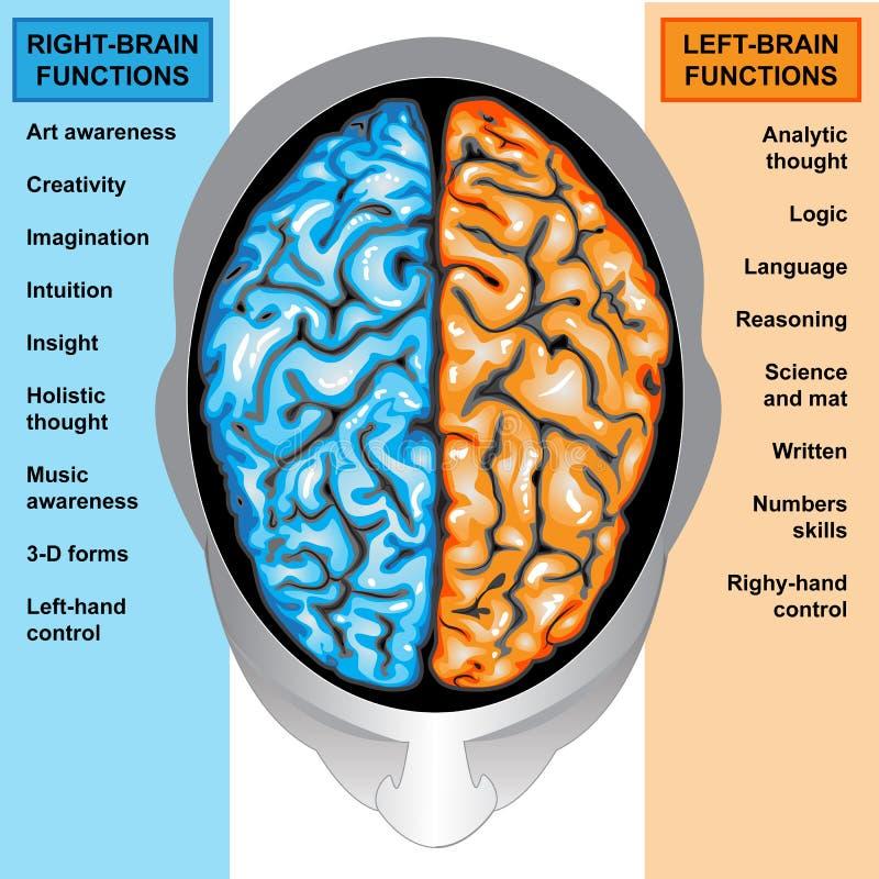 Funções deixadas e direitas do cérebro humano ilustração royalty free
