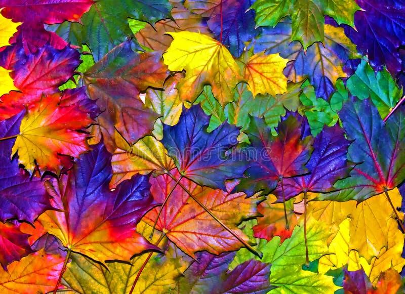 Fun autumn leaves royalty free stock photo