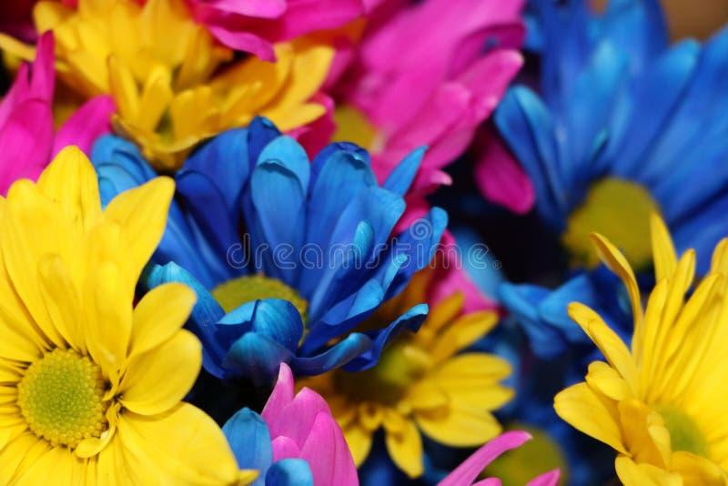 Fun Flowers stock photo