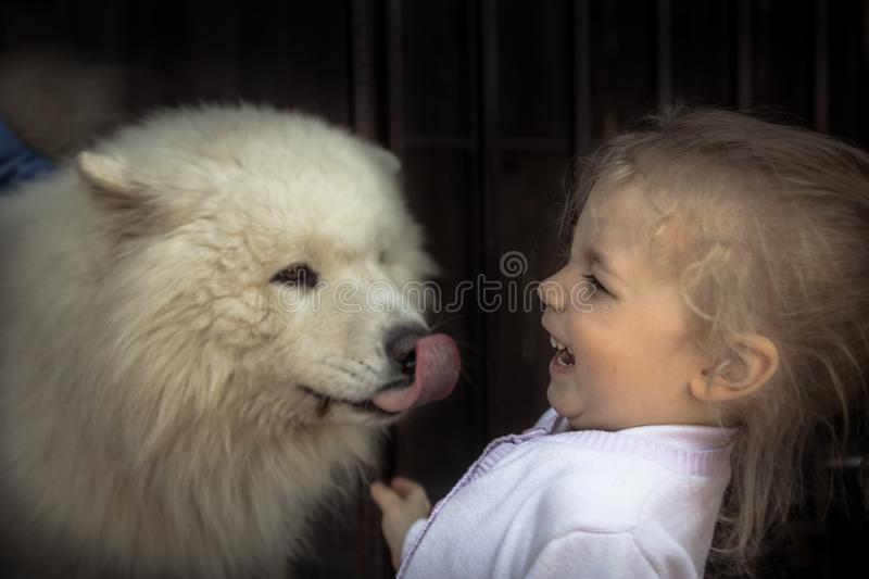 Fun kid child kind puppy dog domestic animal care concept animal love care friendship kindness. Fun laughing kid child kind puppy dog domestic animal care royalty free stock photo