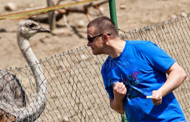Download Fun With An Ostrich stock photo. Image of outdoors, fence - 44462792