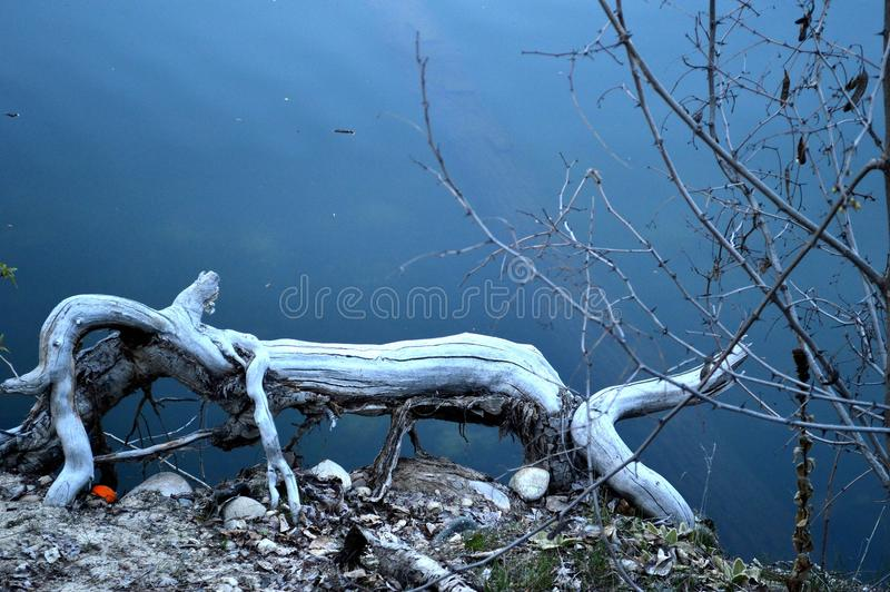Download Whimsical Log Animal In The Lake Stock Image - Image of animal, blue: 100820797