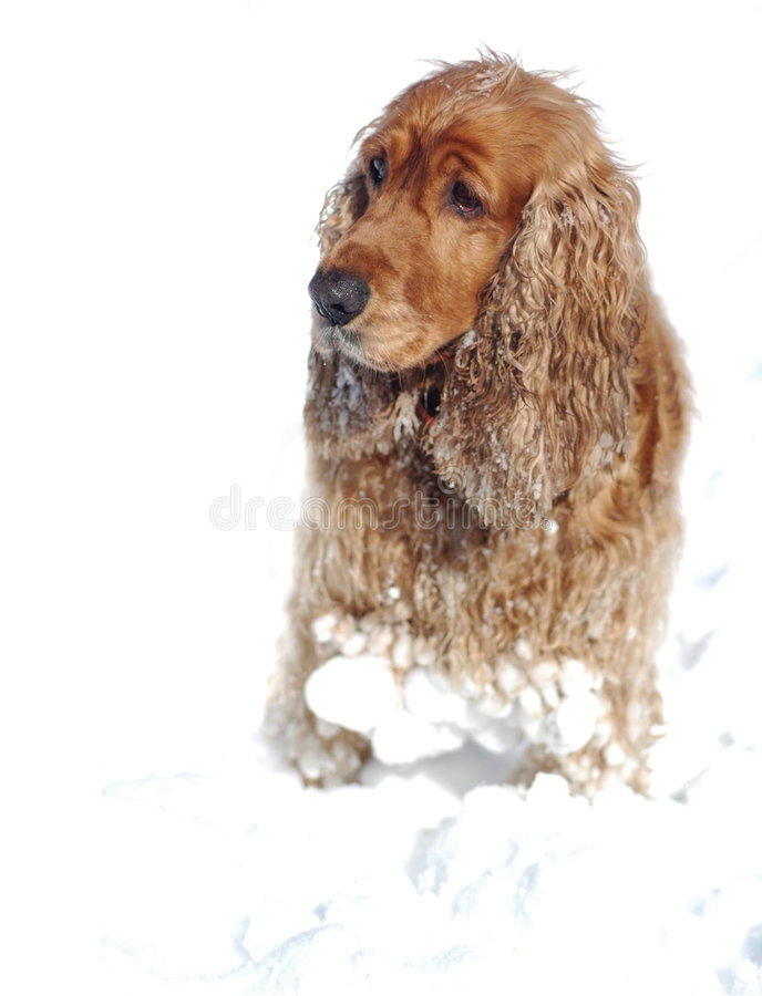 Download Fun in the snow stock photo. Image of bathtub, hairy, cold - 592224