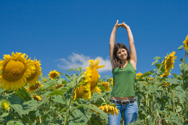 Fun in the sunflower field royalty free stock image
