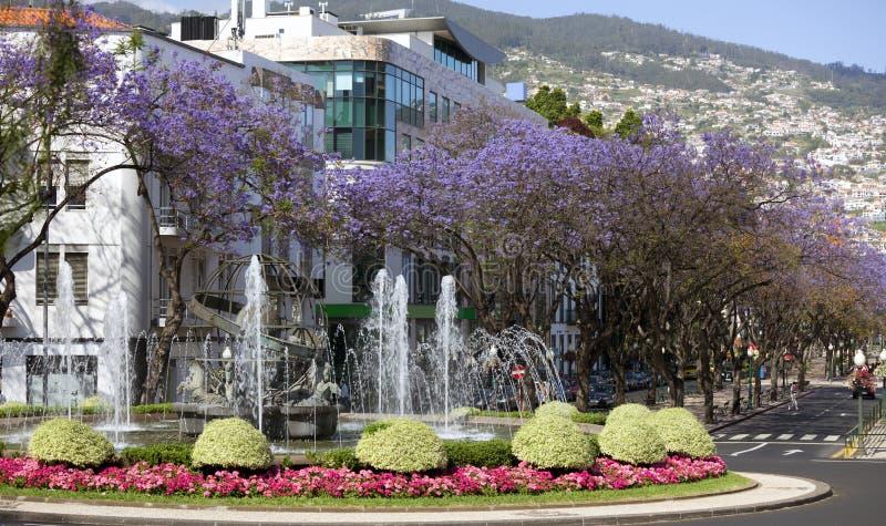 Funchal in het Eiland van Madera royalty-vrije stock fotografie