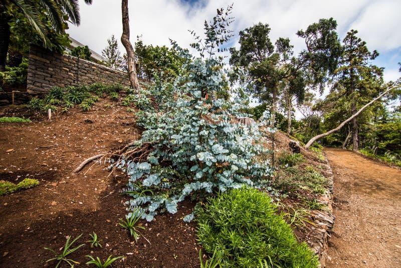 Funchal, Madeira - julio de 2018 El jardín botánico famoso en Funchal, isla de Madeira, Portugal fotografía de archivo