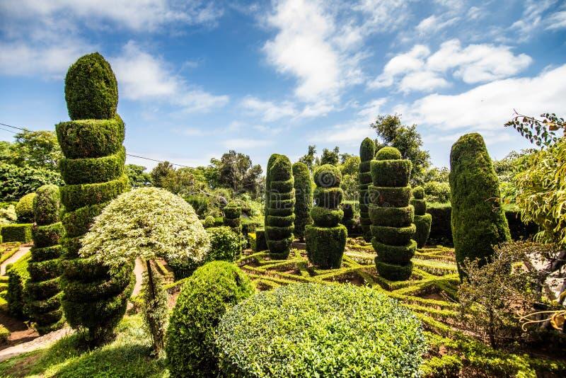 Funchal, Madeira - julio de 2018 Parque verde decorativo - jardín botánico Funchal, Madeira fotos de archivo