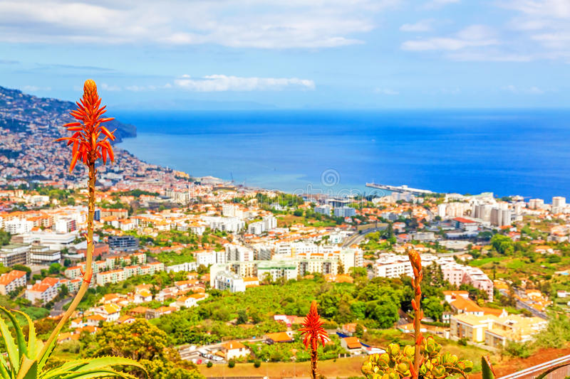 Funchal, Madeira. South coast of Funchal - view over the capital city of Madeira towards harbor with typical madeiran flowers in the foreground. View from Pico stock photos