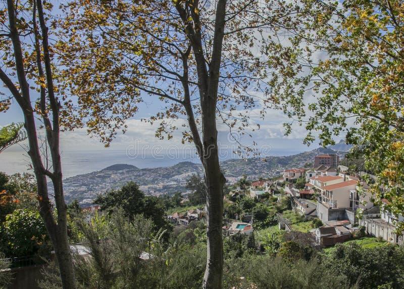 Funchal, Madeira - un día soleado en el jardín botánico fotos de archivo