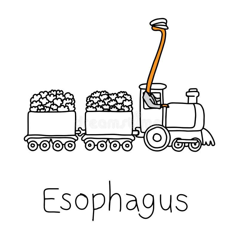 Función de la metáfora del esófago para llevar la comida, líquidos, y el saliv ilustración del vector