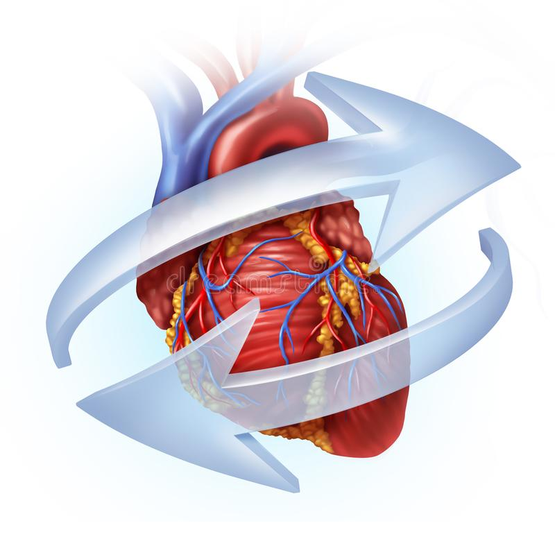 Función humana del corazón ilustración del vector
